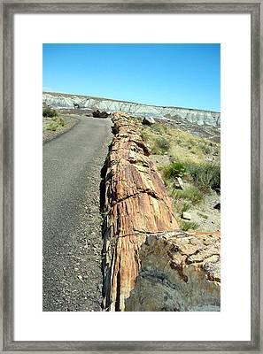 Petrified Log Framed Print