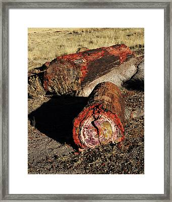 Petrified Logs, Petrified National Framed Print