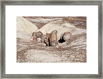 Petrified Tree In Painted Desert At Petrified Forest National Park Arizona Framed Print by Shawn O'Brien