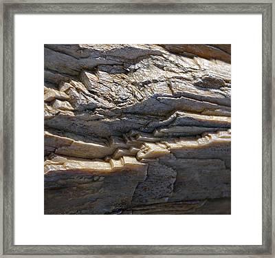 Petrified Wood  Framed Print by Christine Burdine