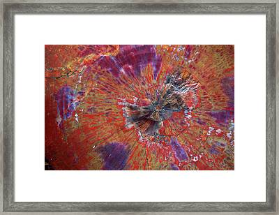 Petrified Wood Detail Framed Print by