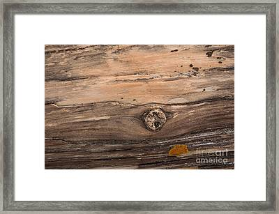 Petrified Wood Detail Framed Print by Vivian Christopher