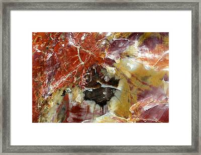 Petrified Wood Framed Print
