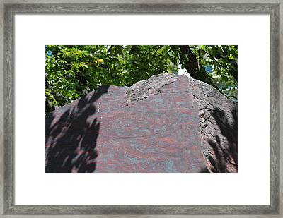 Petrified Wood On Display Framed Print