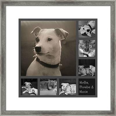 Pets Collage Framed Print by Carolyn Ricks