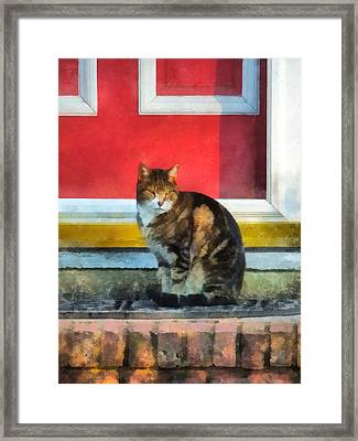 Pets - Tabby Cat By Red Door Framed Print by Susan Savad