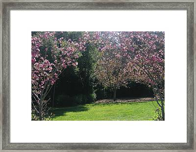Petty In Pink Framed Print by Marian Jenkins