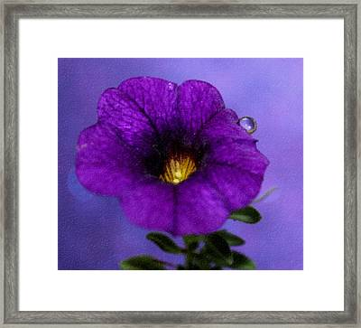 Petunia Dream Framed Print