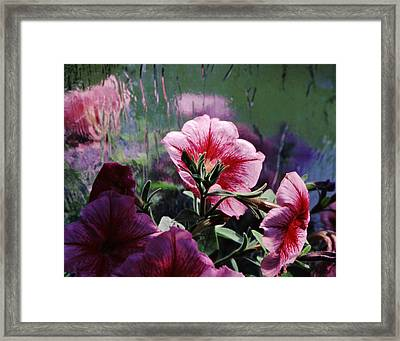 Petunia Reflection Framed Print