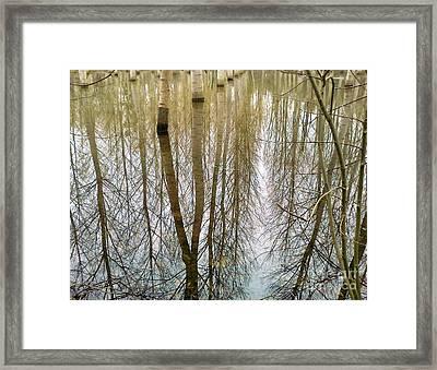 Peupliers Framed Print