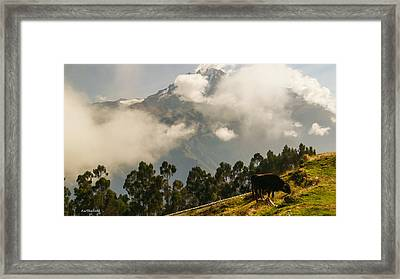 Peru Mountains With Cow Framed Print