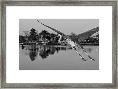 Pewter Great Blue Heron Framed Print