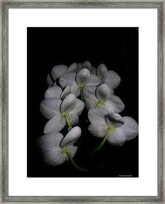 Phalaenopsis Backs Framed Print by Joyce Dickens