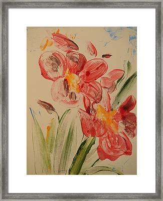 Phalaenopsis In Pink Framed Print by Valerie Lynch