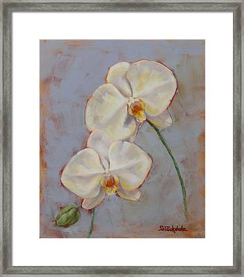 Framed Print featuring the painting Phalaenopsis Orchid by Margaret Stockdale