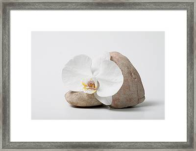 Phalenopsis And Rock 83 Framed Print