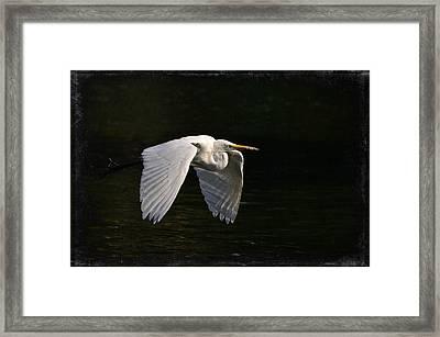 Phantom Framed Print by Fraida Gutovich