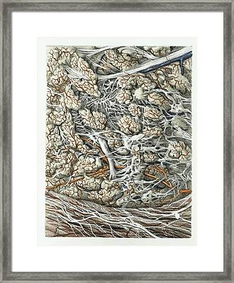 Pharynx Lining Framed Print by Science Photo Library
