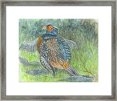 Pheasant Common Male Framed Print by Carol Wisniewski