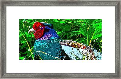Pheasant Digiartwork Framed Print