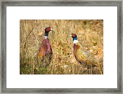 Pheasant Friends Framed Print by Bill Pevlor