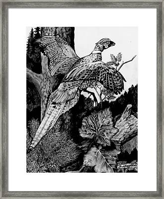 Pheasant In Flight Framed Print