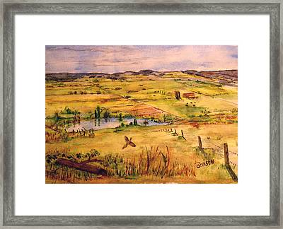 Pheasant In Flight Framed Print by Blaine Benson