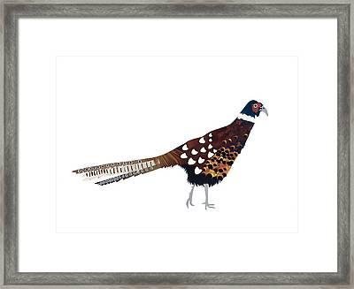 Pheasant Framed Print by Isobel Barber