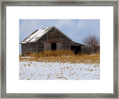 Pheasant Retreat Framed Print by Laurie Wilcox