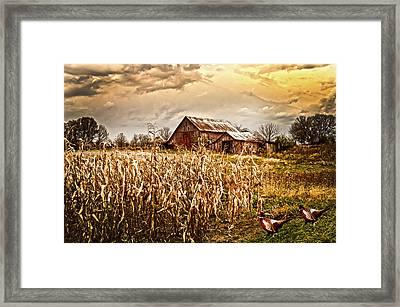 Pheasants Heading For Corn Patch Framed Print by Randall Branham