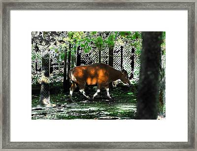 Phenomena Of Banteng Walk Framed Print