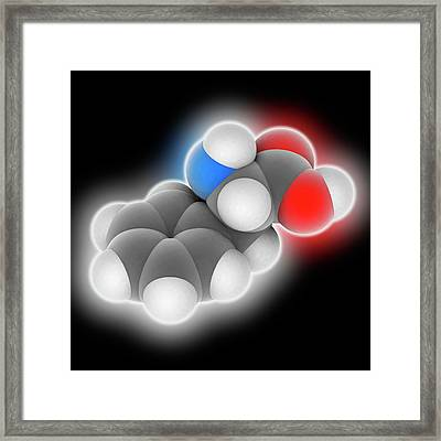 Phenylalanine Molecule Framed Print by Laguna Design
