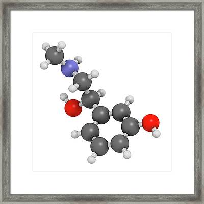 Phenylephrine Decongestant Drug Molecule Framed Print by Molekuul
