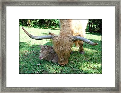 Pheona And Buffie Framed Print by Kathy Sampson