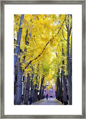 Philly In The Fall Framed Print by Andrew Dinh