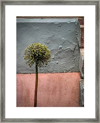 Framed Print featuring the photograph Philly Plant by Glenn DiPaola