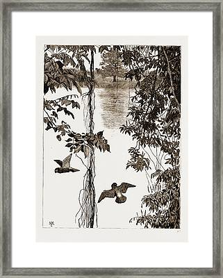 Philodendron Roots And Creeper On The River Quanza Framed Print