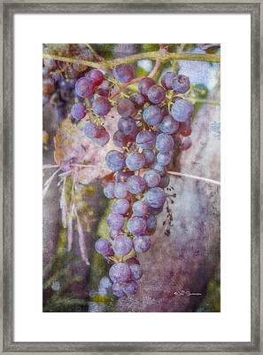 Phil's Grapes Framed Print by Jeff Swanson