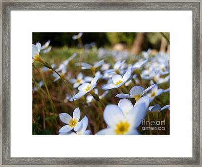 Phlox In The Wind Framed Print by Steven Valkenberg
