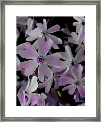 Phlox- Limited Edition 1 Of 10 Framed Print