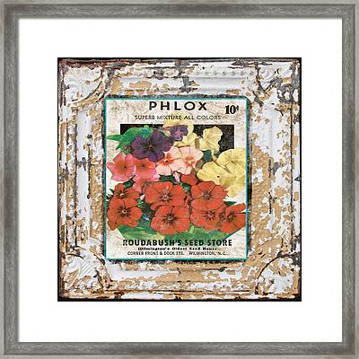 Phlox On Vintage Tin Framed Print