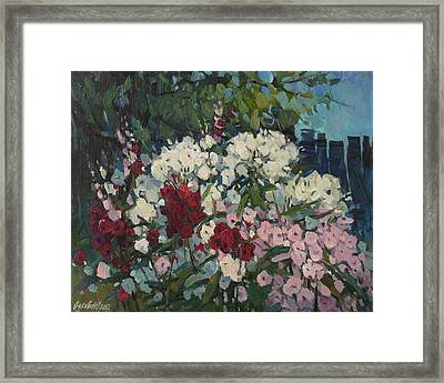 Phloxes In The Garden Framed Print