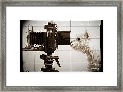 Pho Dog Grapher - Ground Glass View Framed Print