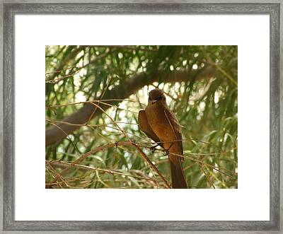 Phoebe Framed Print by Abril Gonzalez