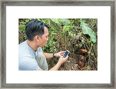 Phone Used To Photograph Pitcher Plant Framed Print