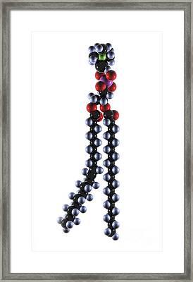 Phospholipid Molecule, Artwork Framed Print
