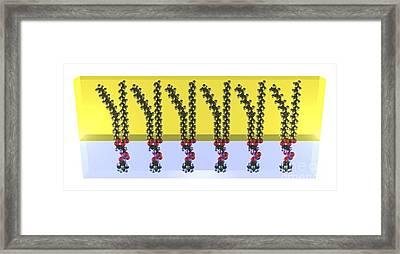 Phospholipids In A Membrane, Artwork Framed Print