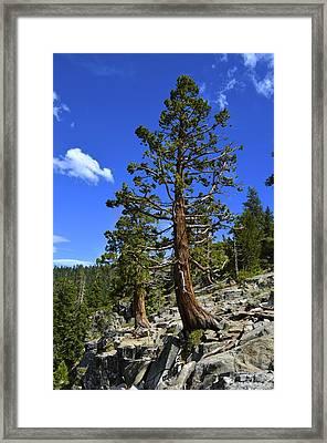 Trees Near Emerald Bay Lake Tahoe Framed Print by Alex King