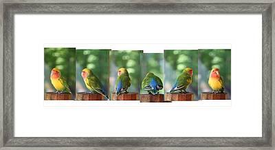 Photo Shoot Framed Print