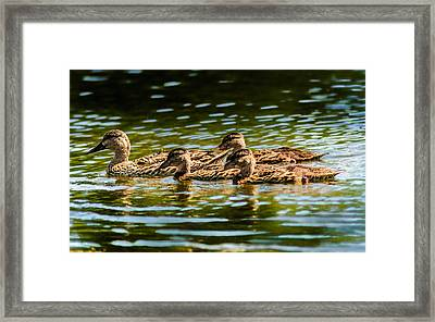 Photography Painting Of Mother And Her Ducklings Framed Print by Optical Playground By MP Ray